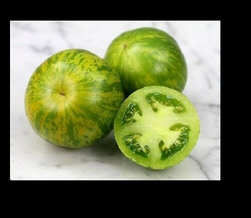 "3 Live 4 - 8"" inch Seedlings Green Zebra Tomato Rare Beautiful Color Heirloom"