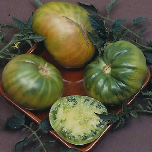 "3 Live 4 - 6"" inch Aunt rub'y German Green Heirloom Rare Largest beefsteak > 1LB"
