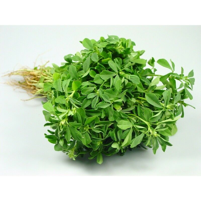 "3 Live 4 - 7"" inch Seedlings FENUGREEK Heirloom Hu Lu Ba Methi Semen Rare Herb"