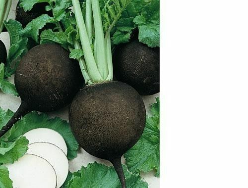 30+ Seeds Black Spanish Round Radish Heirloom Crisp Spicy Easy Grow Non-GMO