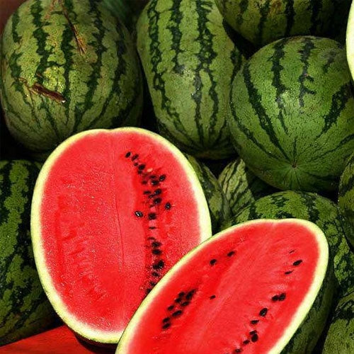 100 Seeds JUBILEE Watermelon Heirloom Red good shipper vegetable Big 30 pounds