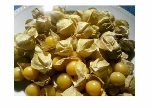 400 seeds Ground Cherry aka Strawberry Husk Tomato Physalis Pruinosa Tomatillo