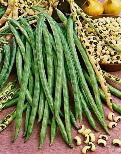 50 BLACKEYE PEA Black Eye Eyed Southern Cow Peas Seeds California Fresh Beans
