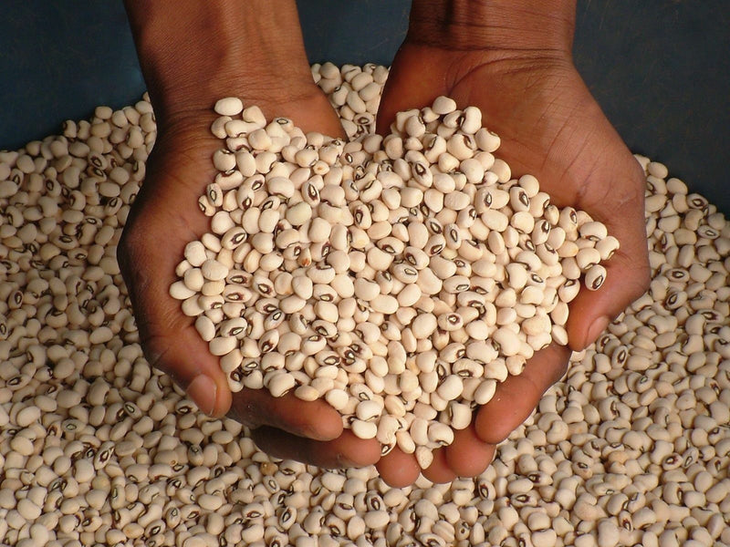 500 BLACKEYE PEA Black Eye Eyed Southern Cow Peas Seeds Heirloom Fresh Beans