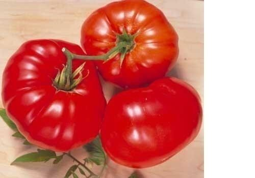 Brandywine RED Tomato 500 Seeds  Heirloom Open Pollinated fresh Non-GMO Big