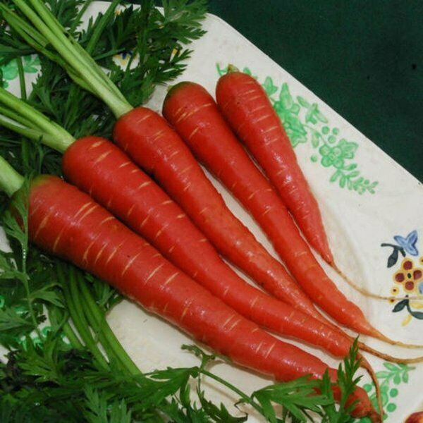 Atomic Red Carrot 300 - 4,000 Seeds Beautiful color High content Lypocene! RARE