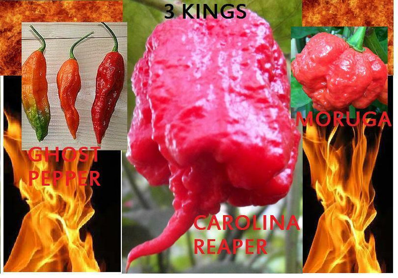 COMBO Bhut Jolokia Ghost pepper Carolina Reaper Trinidad Moruga Scorpion HOT!!!!