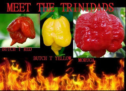 COMBO PACK: 20 Seeds Trinidads BUTCH T RED & YELLOW, MORUGA SCORPION Hot PEPPER