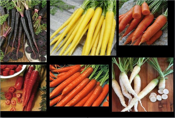 Carrot Seeds COMBO Nebula Atomic Red Cored Chantentay White Solar Yellow Nantes