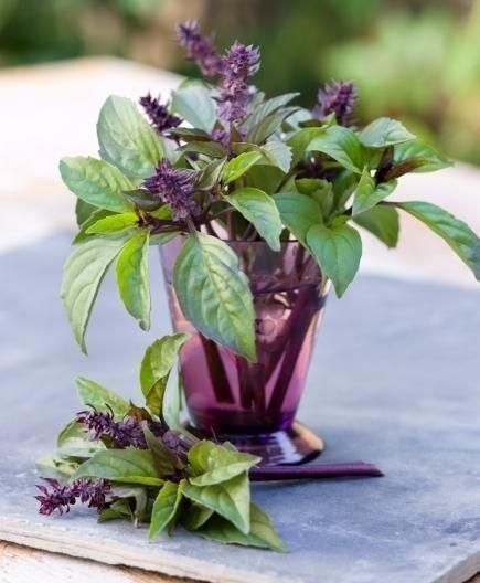 Cinnamon Basil 100 Seeds Fresh Heirloom culinary scent Herb plant Pesto Spicy