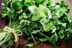 Coriander CILANTRO Seeds Microgreens Leisure Heirloom Chinese Parsley Bulk Herbs