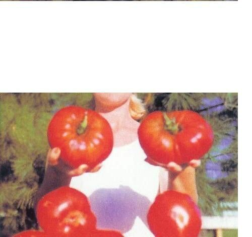 GIANT Delicious Tomato 30 Seeds World Record 7 lbs 12 oz! BIG HEIRLOOM Non-GMO