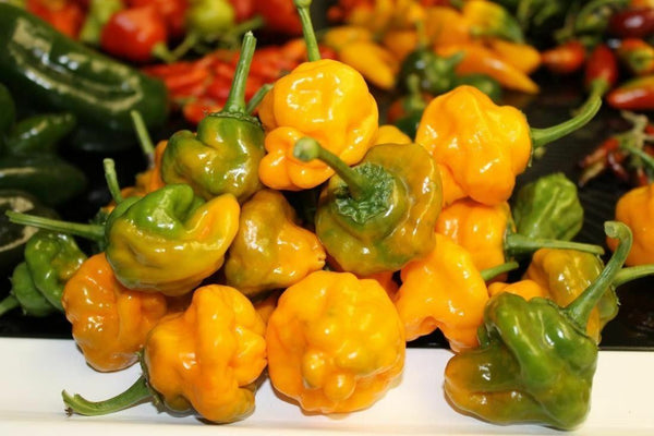 Jamaican Yellow 20 Seeds Hot pepper scotch bonnet heirloom non GMO Rare