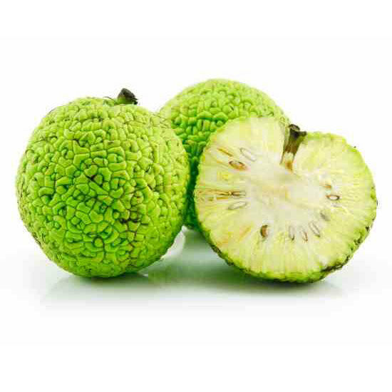 Osage Orange 10 - 1000 Seeds Hedge Apple Tree maclura pomifera monkey balls