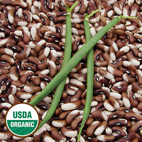 Painted Pony Beans 10 Seeds Organic Stringless pods Bush Snap or Dry Heirloom