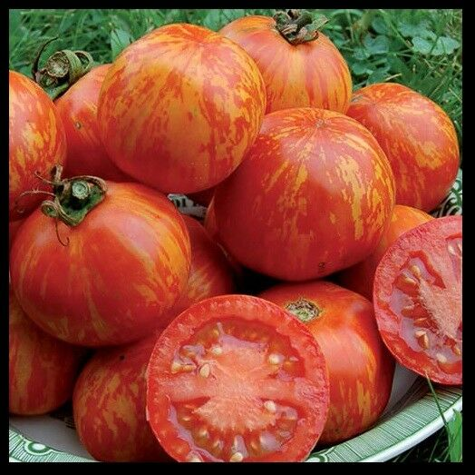Red Zebra Tomato 10 - 200 Seeds Rare Heirloom Very productive! Combined shipping