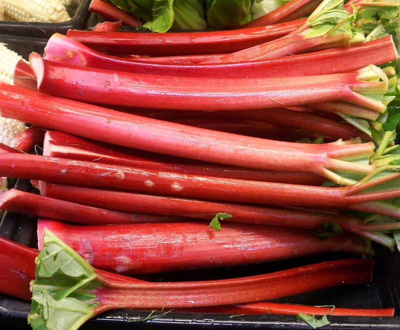 Rhubarb VICTORIA 25 - 8000 seeds Heirloom tastes great fresh or Pie Jam Bulk
