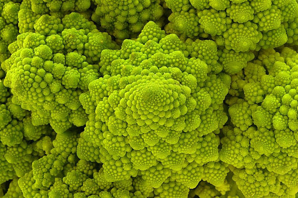 Romanesco Italia Broccoli 100 Seeds Fractal Natalino Brocoflower RARE Heirloom
