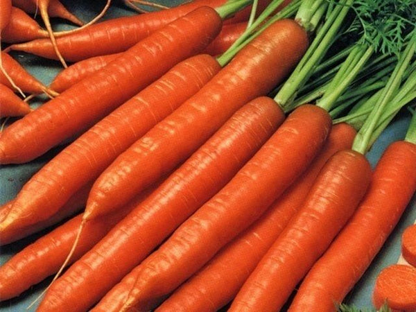 Scarlet Nantes Carrot < 100 - 20,000 > Seeds Heirloom Fresh Sweet Crispy Non-GMO