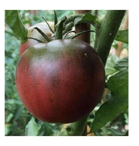Black from Tula Tomato Seeds 30, 50, 200 Rare purple Russian Fresh Heirloom