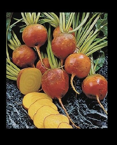 Burpee's Golden Beets {30,100,200,400} Seeds Heirloom treated 55 days Bulk