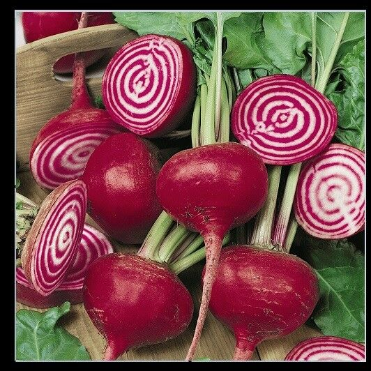 Chioggia Beet 60 - 1200 Seeds CandyStripe Bull's Eye Mild Bassano Microgreens