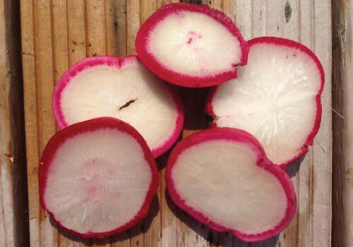 Crimson Giant Radish 100, 200, 500, 2000 seeds Crispy Huge Heirloom Wholesale