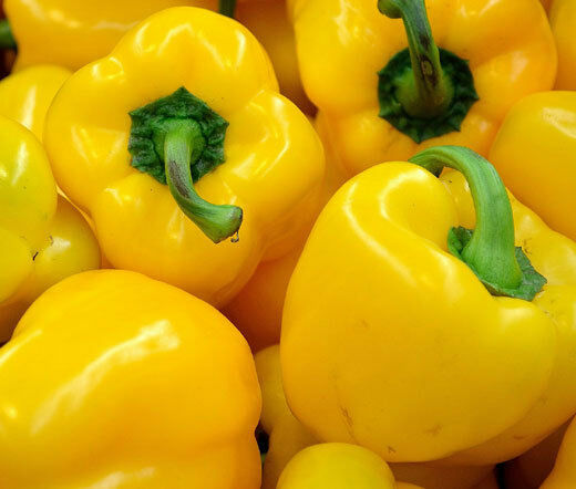 Golden California Wonder Bell Pepper 20 - 4,000 Seeds Sweet Bulk Yellow Rare