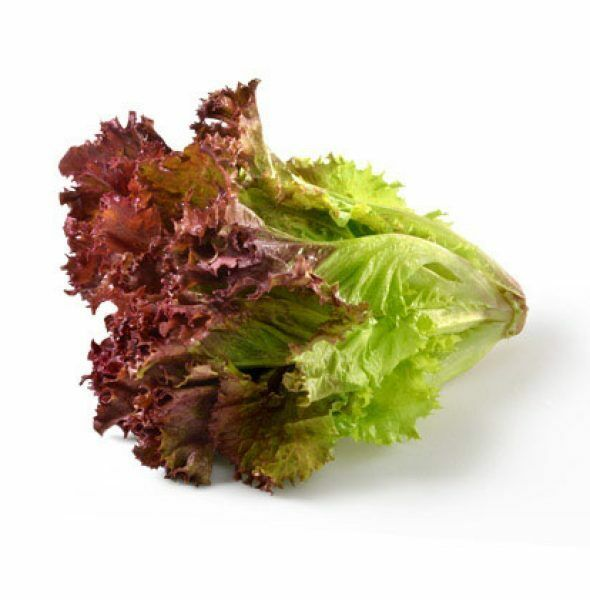 Oak Leaf RED Lettuce (Oakleaf) Seeds Loose Leaf 500, 1000, 2000, 5000 Bulk Crisp