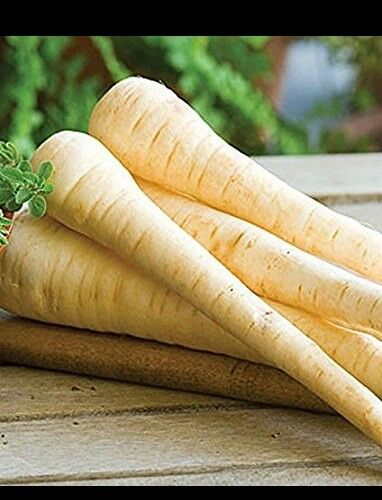 Parsnip 100 - 32,000 Seeds Improved Hollow Crown Heirloom Creamy Bulk Nutty DIY