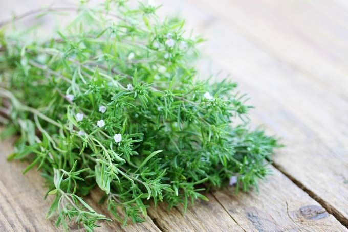 Summer Savory Herb 100-64,000 Seeds Healthy Green annual perennial Heirloom Bulk
