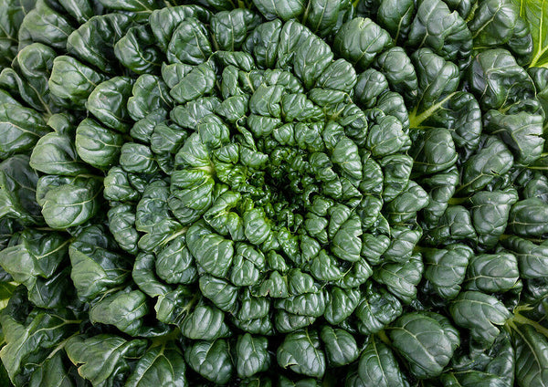 Tatsoi 200 - 4000 Seeds Green Asian Mustard Thick Tender High Vitamin! Spinach