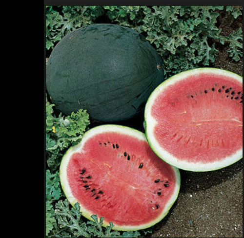 Watermelon 25 - 50 -100 Seeds Bush Sugar Baby Heirloom Non GMO Beautiful small