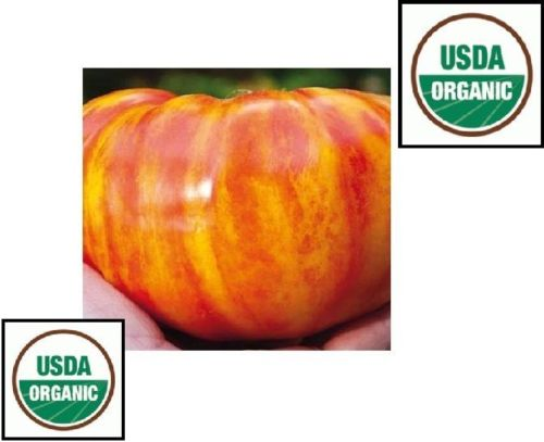 20 seeds Big Rainbow Tomato ORGANIC Heirloom big beefsteak meaty beautiful rare