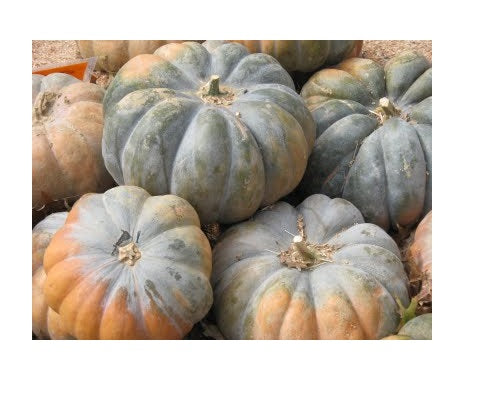 10 Seeds Fairytale Musque De Province Pumpkin Heirloom Big Beautiful