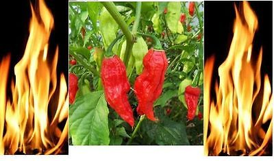 1000 Red Bhut Jolokia Seeds Ghost Pepper HOT Chilli 900K-1M+ SHUS Bulk Wholesale