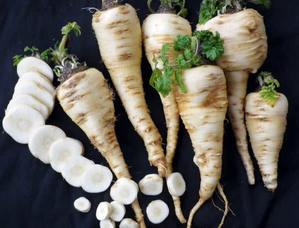 Harris Model Parsnip 100 - 4000 Seeds Heirloom Early good storage Hardy Nutty