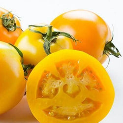 Golden Jubilee Tomato 30 - 300 Seeds Low Acid! meaty interior great for Tomato Juice!