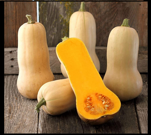 Waltham Butternut Winter Squash 15 - 1200 SEEDS Heirloom Classic Favorite Summer