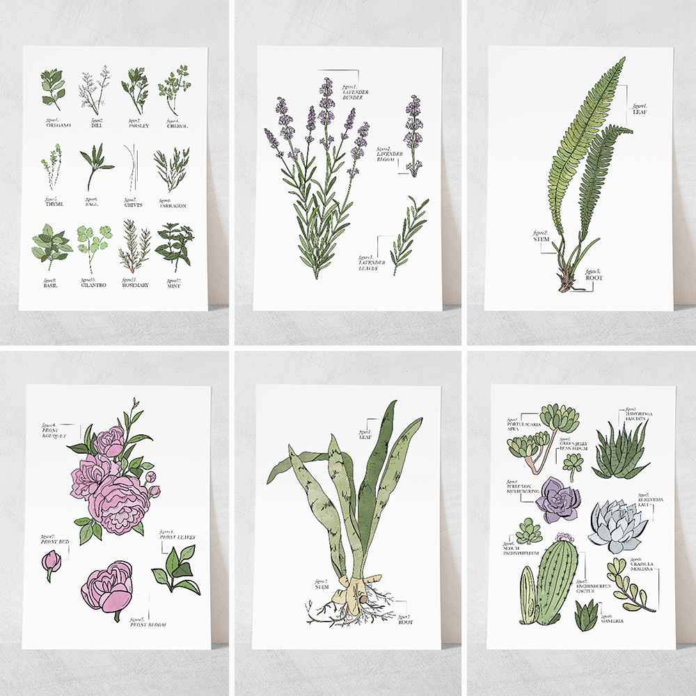 Prints - The Botanicals