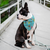Summer Days Blue Pet Bandana