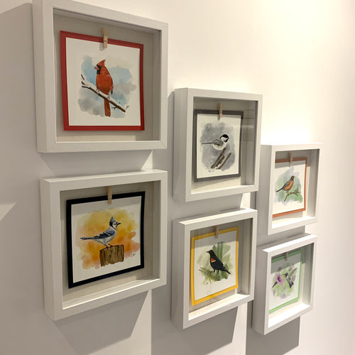 Your favourite backyard bird displayed in a glass-fronted shadow box frame.