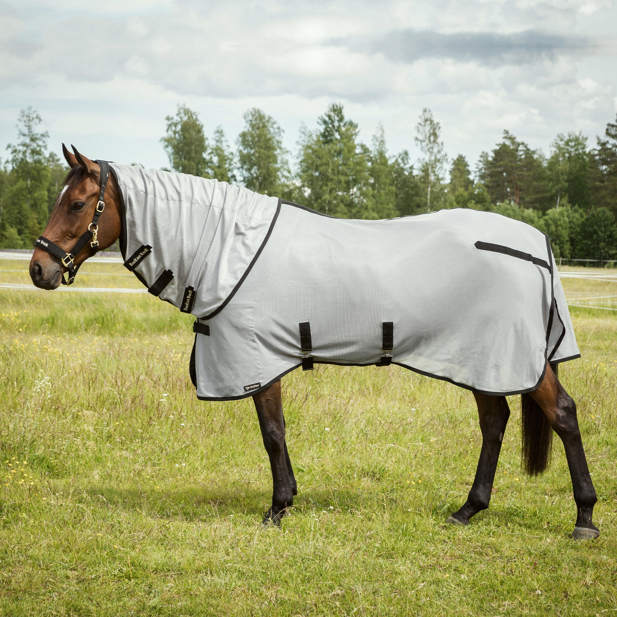 Buzter Fly Rug with Neck