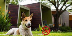 10 Steps to Keep Fleas Out Of Your Home & Your Life
