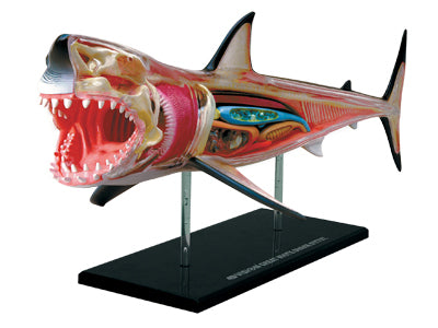 4D Puzzle - GREAT WHITE SHARK Anatomy Model
