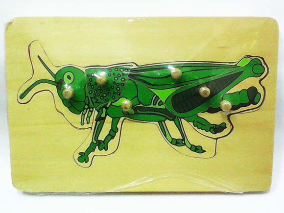 Wooden Puzzle w-handle - Locust Anatomy