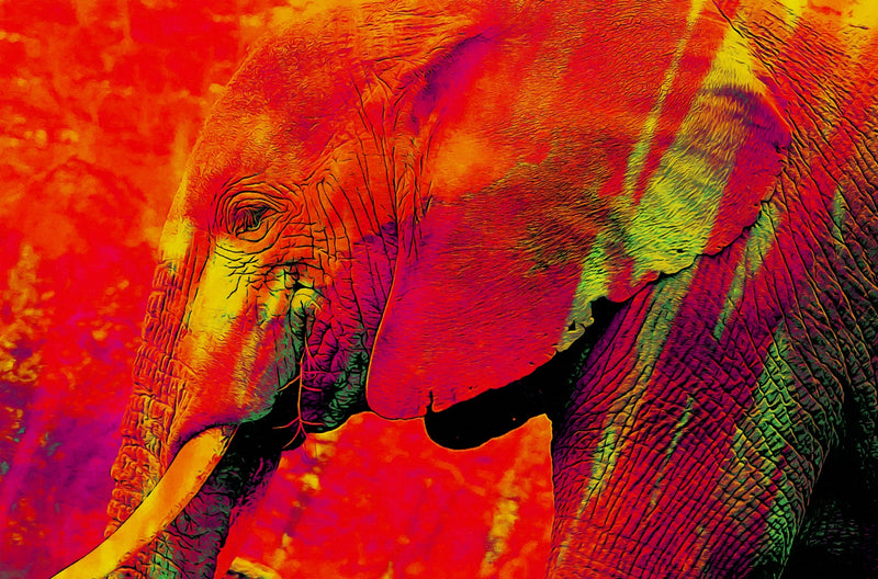 Red Elephant**