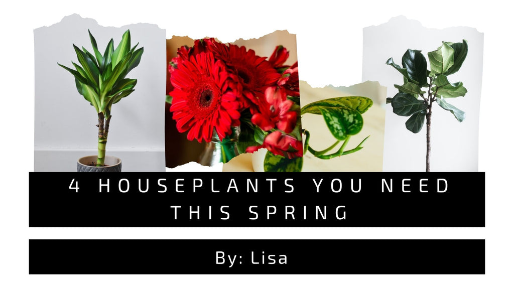 4 HousePlants you need this spring