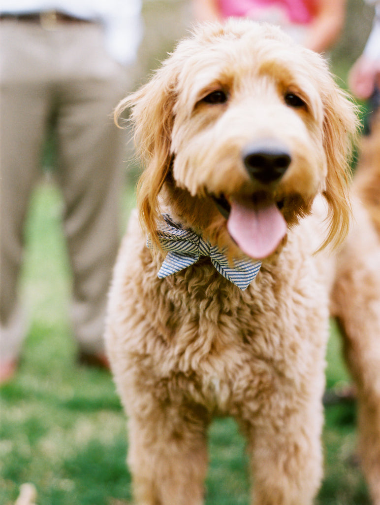 Beau Ties for Pups