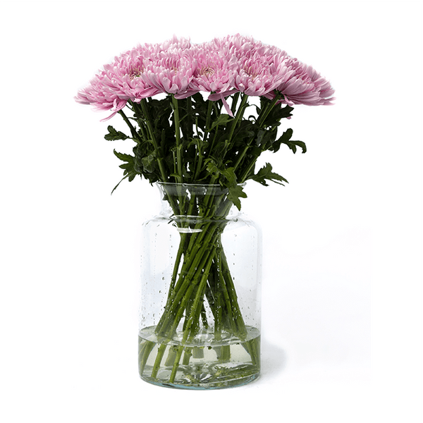Magnum Chrysanthemums Dusty Pink